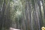 [전남 담양] 죽녹원 - 대나무 숲길을 룰루랄라~