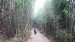 [충남 서천]대통밥 짓기에서부터 대나무숲으로의 산책 '서천 죽동마을'