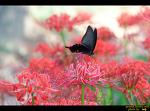 꽃과 나비들....