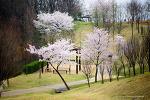 봄의 소식4