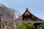 우에노공원 (上野公園)