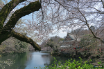 이노카시라공원 (井の頭公園)