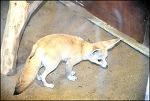미니동물원- 대경대 동물조련이벤트과