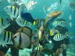 [필리핀 세부 여행] [필리핀 어학연수 후기] SMEAG 어학원 스쿠버 다이빙 자격증, 난루수완 여행