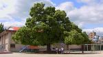 트리 프로젝트 Tree Project Film