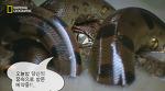 지상의 용 아나콘다, 무서운 식욕과 성욕.. 동물싸움동영상