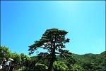 지리산 뱀사골 트레킹 ( 탐방안내소-와운마을 천년송 )