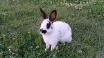 [서울여행] 올림픽공원에 자유를 가득안고 사는 토끼들/사람들로부터 관심과 사랑을 받는, 서울 올림픽공원 내 몽촌토성 잔디밭에 사는 토끼들/서울여행코스/서울 가볼만한 곳