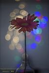 LED 조명을 이용한 빛망울 놀이 with 헬리오스렌즈  58mm 44-2 f2.0   [Helios 58mm f2.0]