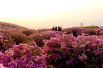 황매산의 봄