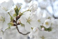 봄을 느껴본 시간...