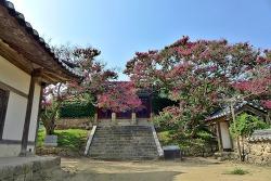 배롱나무꽃의 붉은 빛으로 더욱 아름다운 병산서원