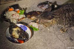 대마도 고양이의 호화스러운 식사