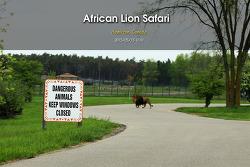 아프리칸 라이온 사파리 African Lion Safari (2015.05.15)