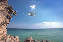해국(海菊)