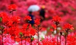 [영상시] 참 멋진 사월을 향해 - 는개 김잔디