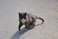 '개 천국'에서 '고양이 천국'으로 변하는 일본