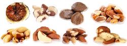 브라질-너트 Brazil nuts