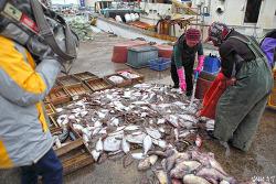 알배기 생선 좋아하는 한국의 딜레마