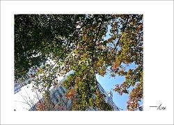 가을을 느끼며...#7