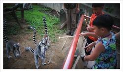 원숭이에 대해 얼마나 알고 있니? 몽키밸리 리얼 대탐험