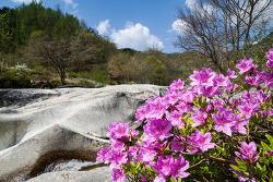 수달래의 봄노래