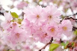 2017 봄꽃 축제일정