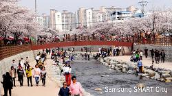 금오산 벚꽃길과 어우러진 금오천, 도심하천에 아름다움이 피다