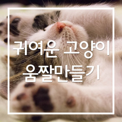 귀여운 고양이 움짤만들기