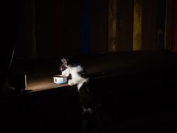 거리의 고양이 10/Cats in the street 10-아파트단지의 길냥이(2)