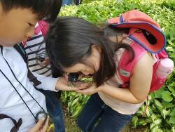 송학초 솔방죽 생태체험학습 실시