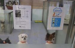 반려동물 입양, 유기동물보호센터에서