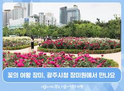 꽃의 여왕 장미, 광주시청 장미원에서 만나요