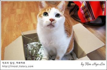 [적묘의 고양이]캣닙 박스가 필요한 이유, 고양이가 먹으면 안되는 독초