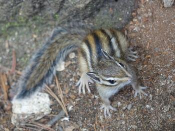 [남이섬 / 자연] 다람쥐는 귀엽다람쥐