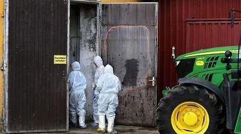 유럽 돼지전염병 100% 사망 사람은?