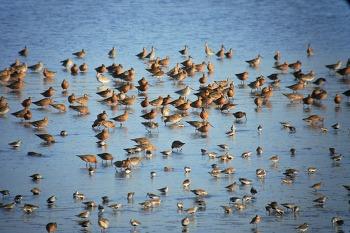 Spring Birding Tours