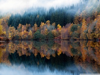 Multicolored Autumn wallpaper