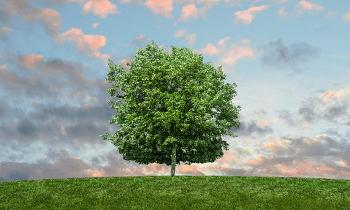 행복이라는 이름의 나무
