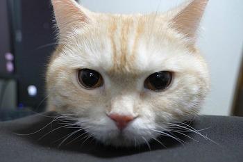 밀레 청소기 C3 Cat&Dog PowerLine