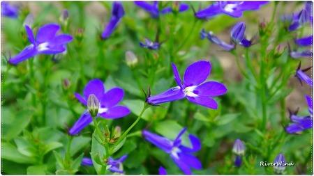 이름 모르는 자주색 예쁜꽃.
