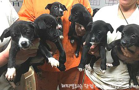 [미국 강아지 쉘터] 입양 센터에서 강아지 입양하다