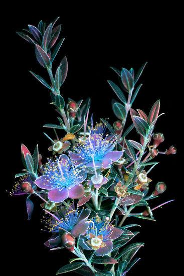 광화학 반응 빛을 이용해서 보이지 않는 빛을 잡은 식물 사진