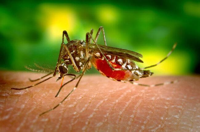 황열병증상과 전염성 꼭 예방을 해야하는 이유는?!