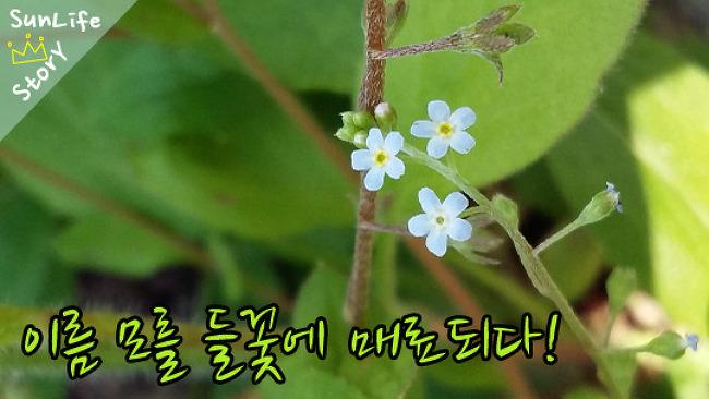아름다운 들꽃을 만나다! - 꽃이 가득해서 좋은 봄!