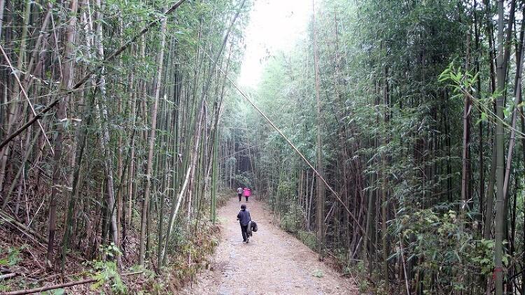 [충남 서천]대통밥 짓기에서부터 대나무숲으로의 산책 '서천 죽동..