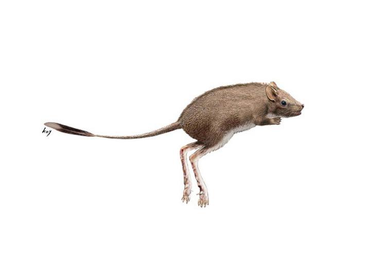 경남 진주에서 중생대 백악기 '뜀걸음(hopping) 포유류의 발자국 화석' 세계 최초 발견
