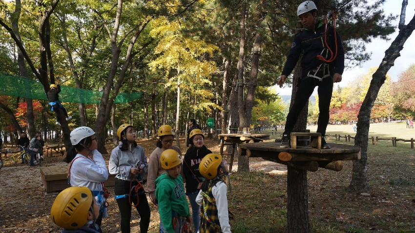 [남이섬/체험] 모험의 숲 TREEGO 🐾
