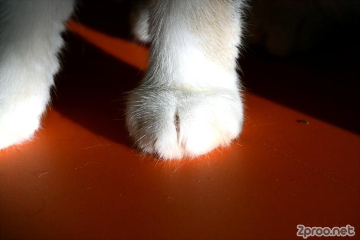 고양이 앞발 사진