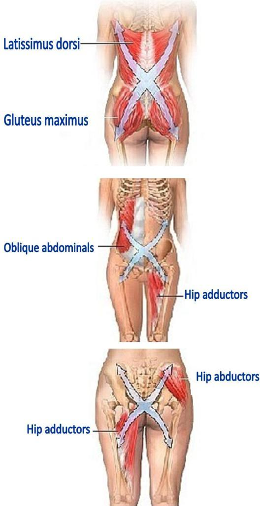 Special T Si >> golf physio :: Three Musculature Slings